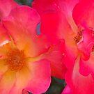Roses in the Garden by Dorthy Ottaway