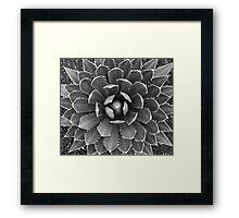 Cactus Black and White Framed Print