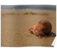 Hermit Crab at Goa Poster