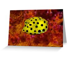 Yellow cube on red coral Greeting Card