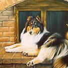 Rough Collie by MysticMeadow