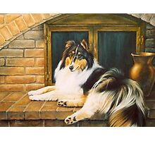 Rough Collie Photographic Print