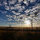 Morning Light by Mark Cooper