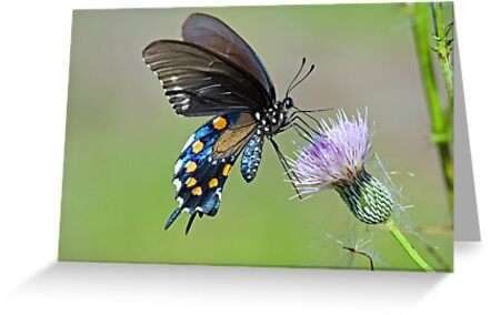 Butterfly in the park by jozi1