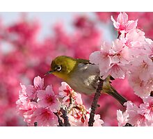 Harbinger of Okinawan Spring Photographic Print