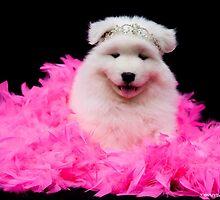 Samoyed Puppy by Tawnydal