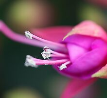 Pink Flower by Heather Eeles