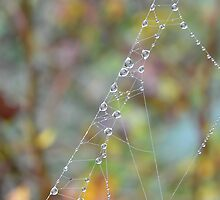 Silky Strands with Dew by relayer51