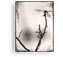 Creative Dragonfly Canvas Print