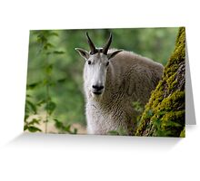 99, 100...... Ready Or Not, Here I Come Greeting Card