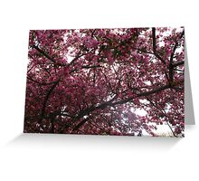 Appreciating the splendours of Spring Greeting Card
