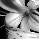 Peek-a-Boo, in Black & White - II by Deb  Badt-Covell