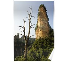 Rock Forest Poster
