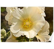 Flower petals of a white flower Poster