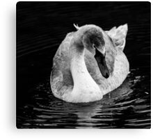 Swan Grace Canvas Print