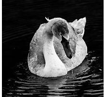 Swan Grace Photographic Print