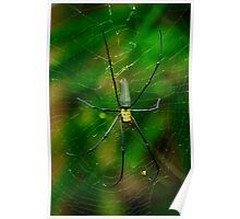 Golden Orb Spider Poster