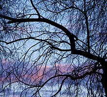 random acts of nature by reflexio