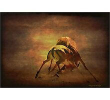 IT IS NOW OR NEVER! - BLACK-FACED IMPALA - Aepyceros melampus petersi  Photographic Print