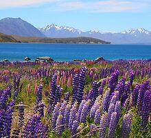 Lake Tekapo and wild flowering lupins by John Dalkin