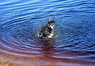 Making A Splash by Chris Goodwin