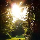 Into The Morning Light. . . by Bine