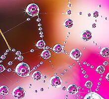 dewdrop daisy by Anton Alberts