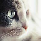 TwistedHearts 2013 Feline Calendar by TwistedHearts
