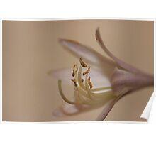 Graceful Bloom Poster