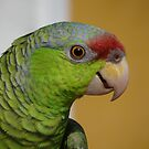 Hi I'm A Parrot And I'm Pretty And Proud - Hola Soy Un Loro Y Soy Guapo Y Orgulloso by Bernhard Matejka