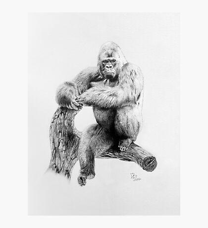 Gorilla, 2012, Pencil Photographic Print