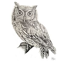 Eastern Screech Owl (Megascops asio), 2012, Pencil Photographic Print