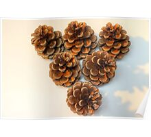 Pinecone Brown Poster