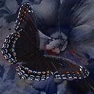 Beauty has wings by vigor