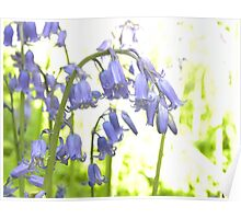Bluebells of The Woods Poster