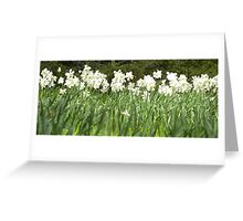 Field of Daffs Greeting Card