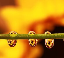 Sunflower by Angela Tice Gunn