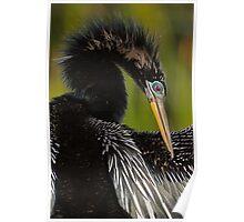 Avian Elegance Poster