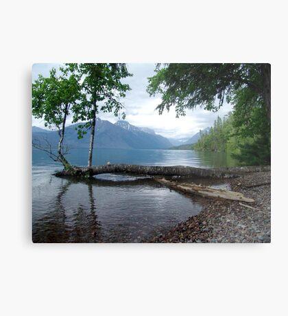 Fallen Aspen, Lake McDonald - Glacier National Park, MT Metal Print
