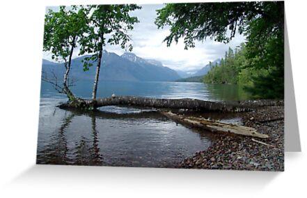 Fallen Aspen, Lake McDonald - Glacier National Park, MT by May Lattanzio