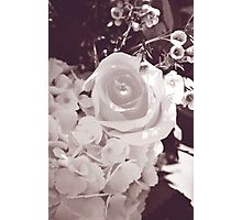 rose flowers black and white  Photographic Print