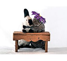 Mr. & Mrs. Rabbit Photographic Print