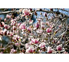 Spring day  Photographic Print