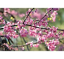 purple flowers tree  Photographic Print