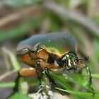 Beetle in the Grass by Paula Tohline  Calhoun