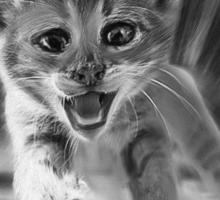 Cat Oil Painting Sticker