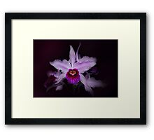 The beauty of form Framed Print