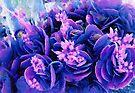 Cactus flowers by Albert