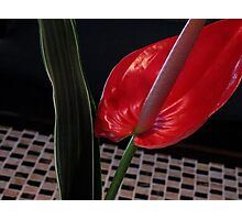 in a Balinese hotel foyer Photographic Print