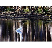 Manatee Springs Bird Photographic Print